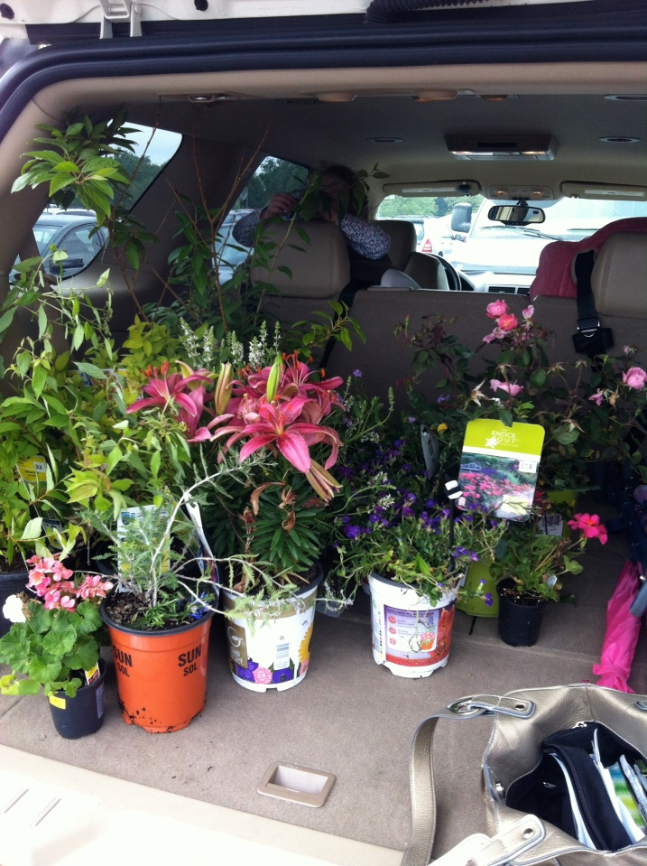 Plants from Lowes